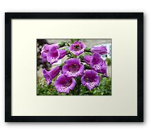 Foxglove Framed Print