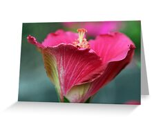 Soft Hibiscus Greeting Card
