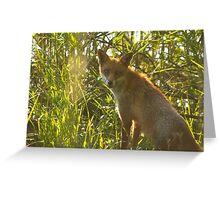 European Red Fox Greeting Card