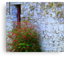 Stone Barn With Fuschia Canvas Print