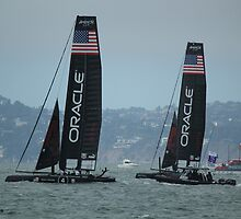 America's Cup  by Lisa Azzolino
