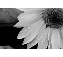 Tears That Last For Years Photographic Print