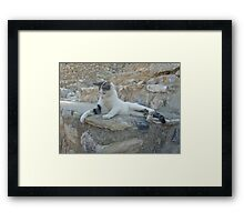 Cat playing with blade of grass Framed Print