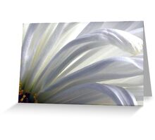 Daisy a Day Greeting Card