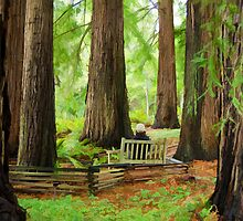 Contemplation Among the Trees by Don Schwartz