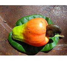 Cashew Photographic Print