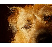Sweet Face Dog Photographic Print