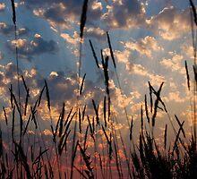 Sunset Through the Grasses by Don Schwartz