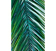Palm Monday Photographic Print