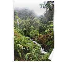 Cloud Forest Waterfalls Poster