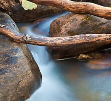 Brush Creek Detail by Kim Barton
