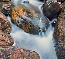 Brush Creek Detail 2 by Kim Barton
