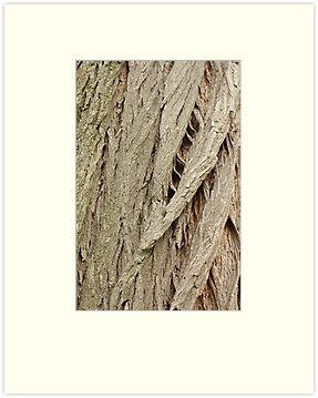 Cedar Bark by Thomas Murphy