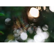 Morning Web Photographic Print