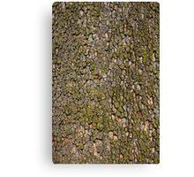 Tree Bark Texture Canvas Print