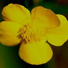 Vivid Yellow by theartguy