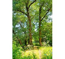 Summer forest Photographic Print