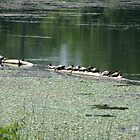 turtles on a log by jolynncreations