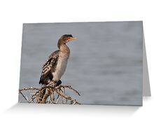 Reed Cormorant Greeting Card