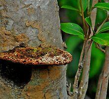 Fungi by Leslie-Ann