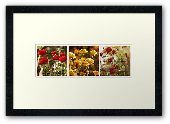 Flowers in Spring ~ A Triptych by Adriana Glackin