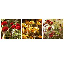 Flowers in Spring ~ A Triptych Photographic Print