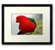 My Mate The King Framed Print