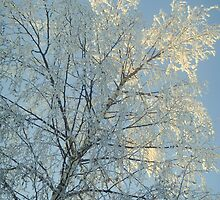 Sunlight on snow by Caroline Clarkson