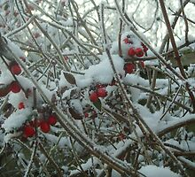 Berries in the snow II by Caroline Clarkson