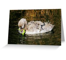 Time For Lunch Baby Swan Greeting Card