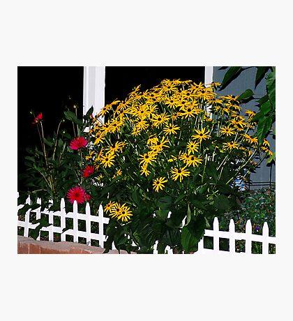 My Flower Garden at Midnight Photographic Print