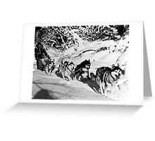 BW USA Alaska dog sled racing 1970s Greeting Card