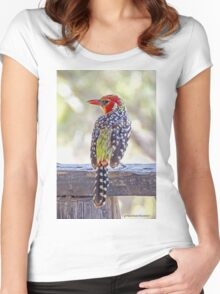 Red-and-Yellow Barbet Women's Fitted Scoop T-Shirt