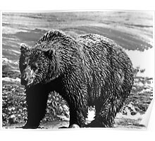 BW USA Alaska brown bear 1970s Poster