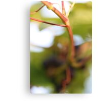 Invisible Grapes Canvas Print
