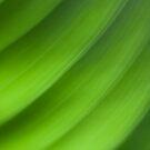 Study of leaves by Angela King-Jones