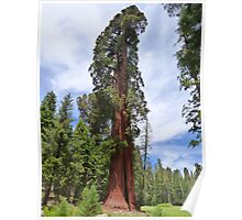 Sequoia National Park, California Poster