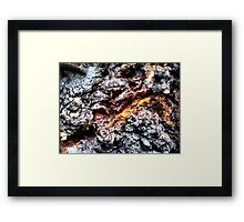 Bark I Framed Print