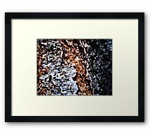 Bark II Framed Print