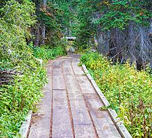 Colorado Rocky Mountain Forest Path by Bo Insogna
