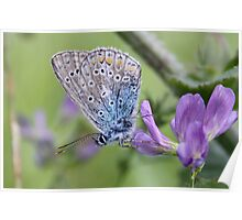 Mister Blue Loves Purple Poster