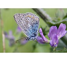 Mister Blue Loves Purple Photographic Print