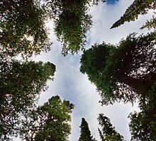 Colorado Rocky Mountain Forest Sky by Bo Insogna