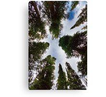 Colorado Rocky Mountain Forest Sky Canvas Print