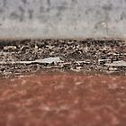 Old Paint I by creamneuron