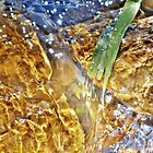 Fresh water by creamneuron