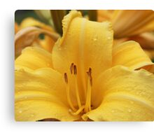 Yellow With Droplets Canvas Print