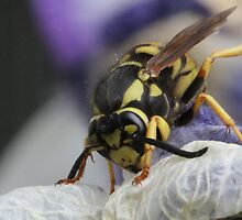 Bugging me by Susan Littlefield
