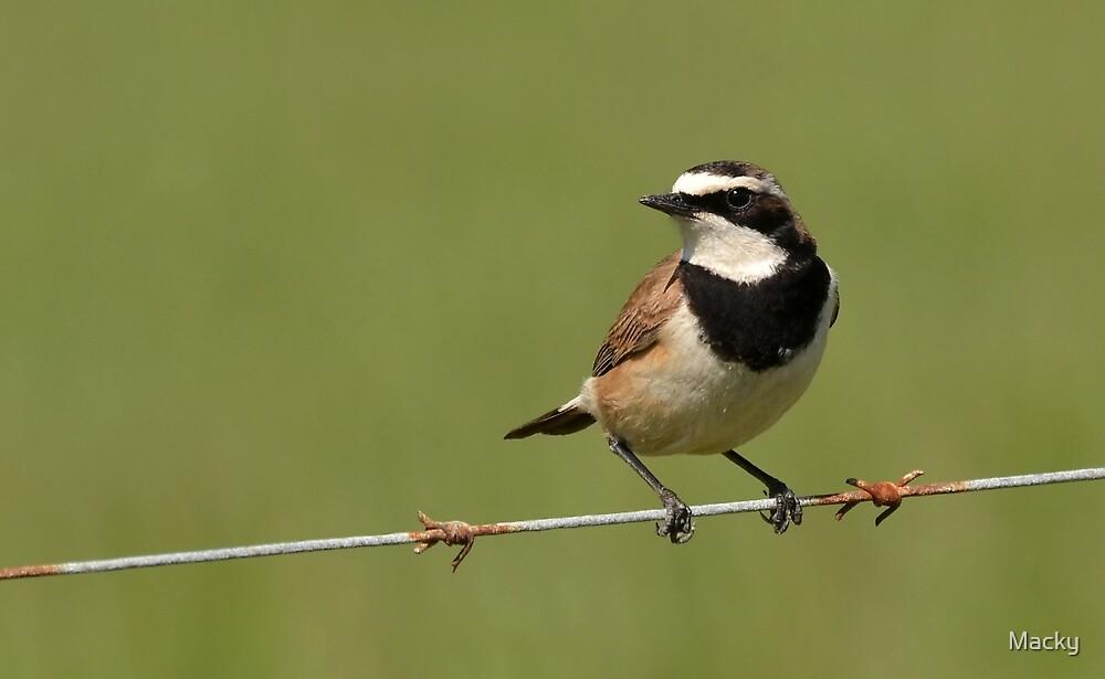 Bird on a Wire..... by Macky
