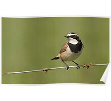 Bird on a Wire..... Poster